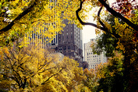Central Park in Autumn, New York
